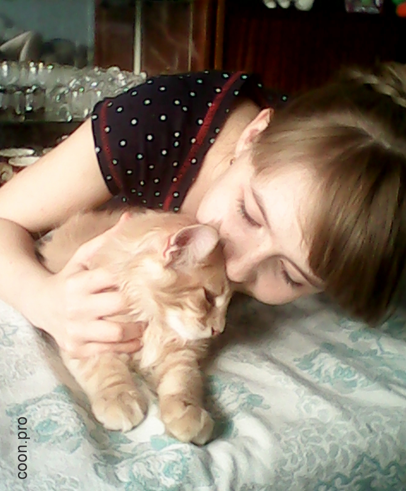 кот мейн-кун