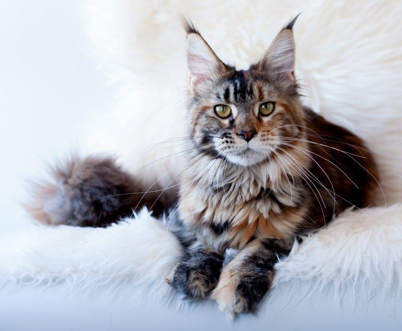 Tsarina Ivanka  7,5  months